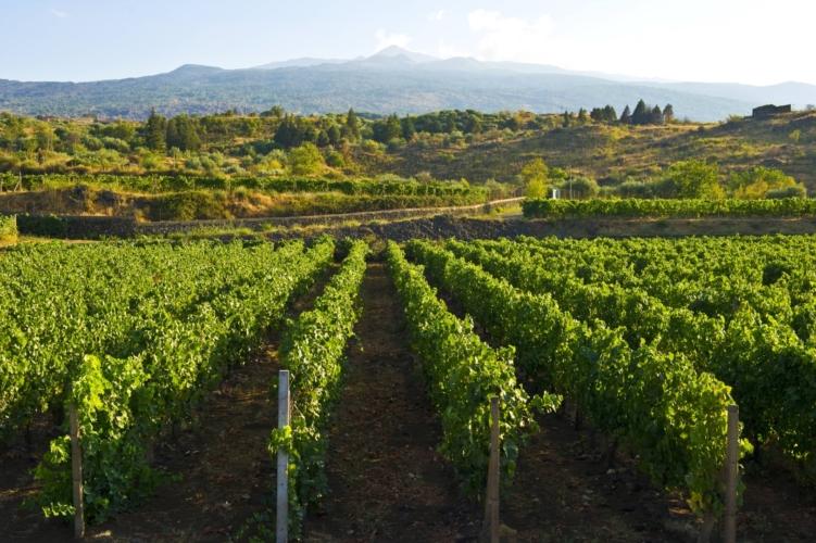 Cottanera vini Etna Sicilia: sotto il vulcano la passione di una famiglia