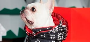 Moncler Poldo Dog Couture 2019: i nuovi cappotti per gli amici a quattro zampe