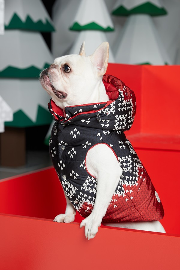 Moncler Poldo Dog Couture 2019