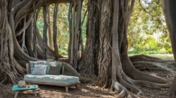 Ethimo outdoor campagna 2020: il decimo anniversario nell'Orto Botanico dell'Università di Palermo