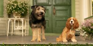 Lilli e il Vagabondo Disney +: il live action del classico d'animazione