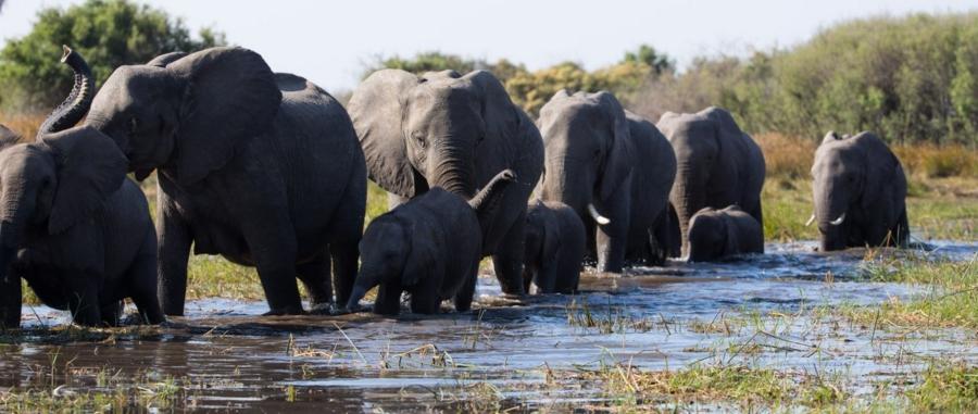 Meghan Markle Disney Elephant: il film documentario in streaming su Disney+