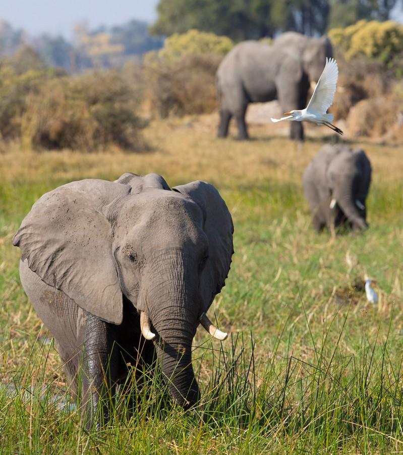 Meghan Markle Disney Elephant