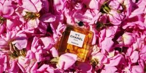 Storia del profumo Chanel N°5: la Rosa di Maggio, il viaggio a Grasse