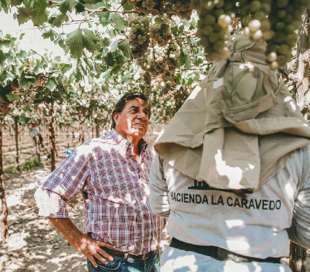 Pisco Porton La Caravedo