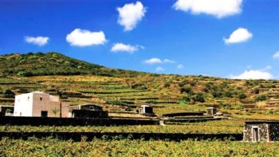Tour del vino Sicilia: 3 itinerati tra le viti dell'Antica Trinacria