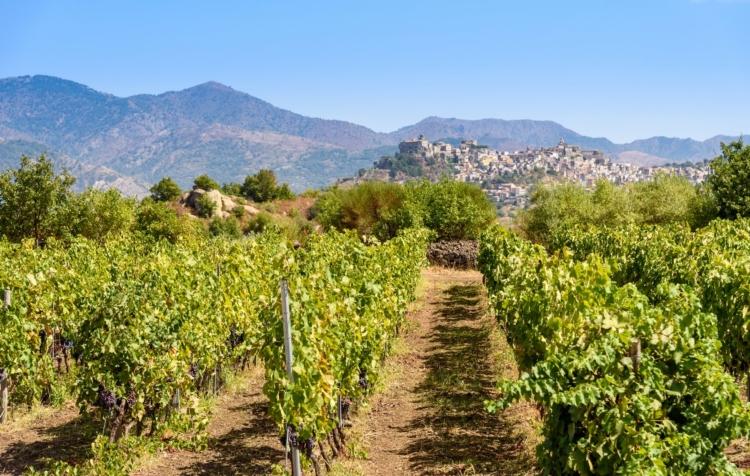 Tour del vino Sicilia