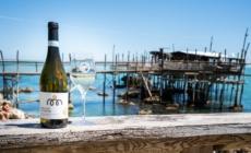 Vino Pecorino Abruzzo abbinamenti: ideale per piatti di pesce, formaggi e carni bianche