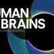 Fondazione Prada Human Brains: mostre, convegni e incontri che pongono al centro il cervello