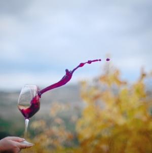Che Vino shop online: vini selezionati tra cantine uniche e speciali