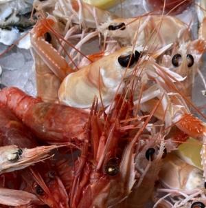 Ristorante Vivo Milano Via Statuto: il vero sapore del mare dall'Argentario in Moscova